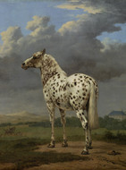 "The ""Piebald"" Horse"