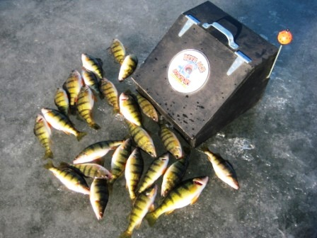 ice-fishing-perch-on-bite-me-box-tipups.jpg