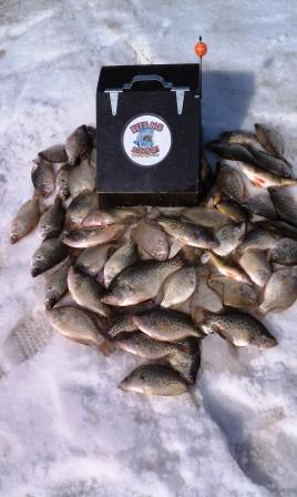 limit-of-crappie-on-bite-me-box-tipups.jpg