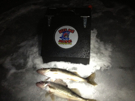 noq-walleye-1-19-13.jpg