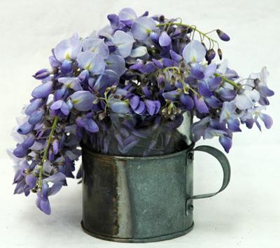 20006-beggar-s-cup-w-wisteria-400w.jpg