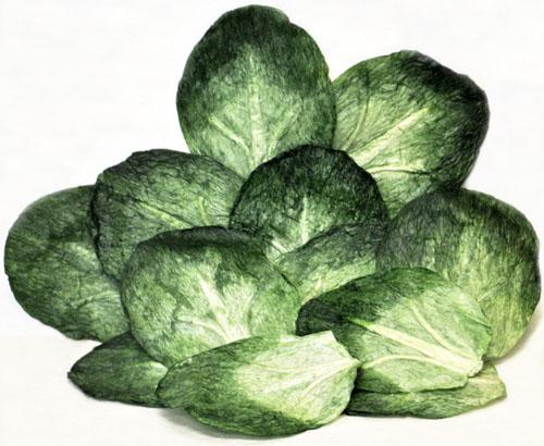 61360-cabbage-leaves-set-12-color-corr-72-500.jpg