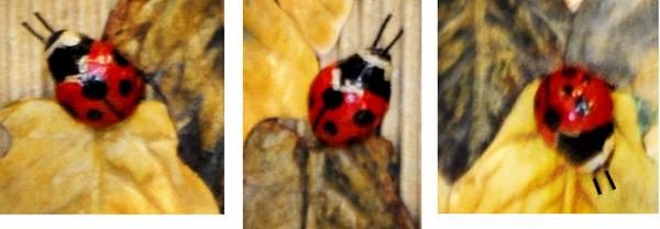 ladybug-comp-600.jpg