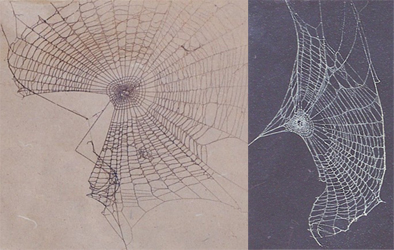 spider-webs-1-.jpg