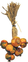 """987500 Italian Onion Cluster - Natural raffia ties a 6 pc. """"bunch"""" of 3"""" faux onions together for a great European kitchen accent.  Onions are hand painted and covered in real onion skin.  Approx 15"""" long."""