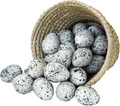 "38010 Heather Hen Eggs - Box/1 Dozen Black speckled ""hen"" eggs are a realistic 2-1/4"" big.   Made of lightweight foam they ca be used in a large variety of art/craft/decor prljects"