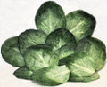 Cabbage Leaves - Pak/12