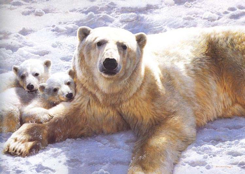 Don Davis Ford >> Mother of Pearls - Polar Bear Carl Brenders Giclee Canvas ...