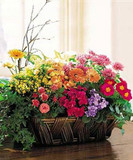 Colorful Planted Basket