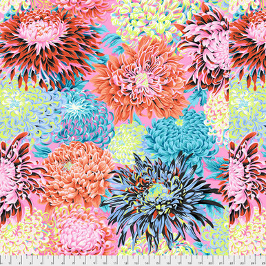 Japanese Chrysanthemum - Contrast Philip Jacobs