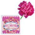 EEBOO - CREPE PAPER FLOWERS - CORDELIA