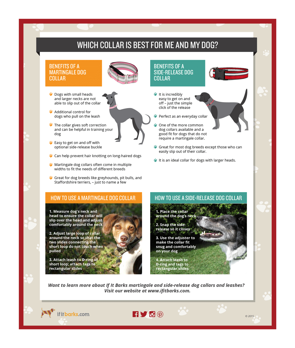 Choosing a Dog Collar Infographic