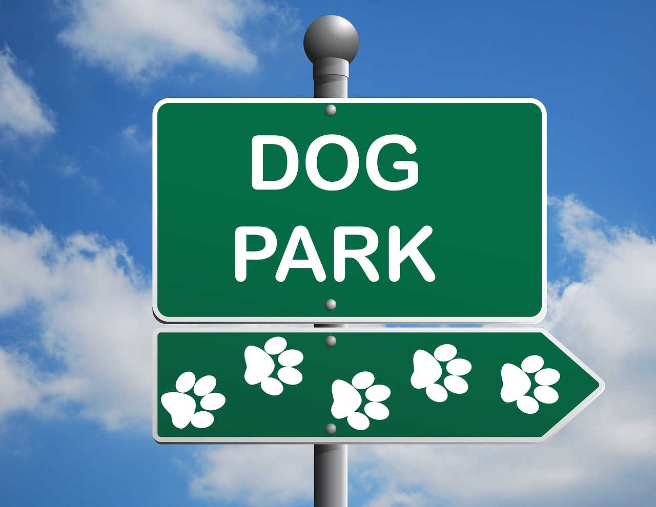 Trips to the dog park keep your dog--and yourself--better socialized.