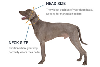 How to Measure Your Dog's Neck for a New Dog Collar