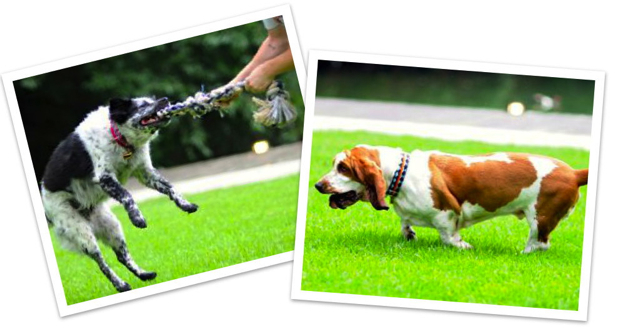 Client testimonial If It Barks martingale dog collars