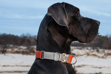 Always top quality dog collars