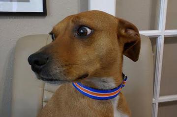 Best Dog Collar We've Owned!
