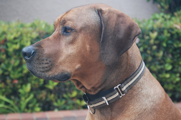 Love the martingale collar