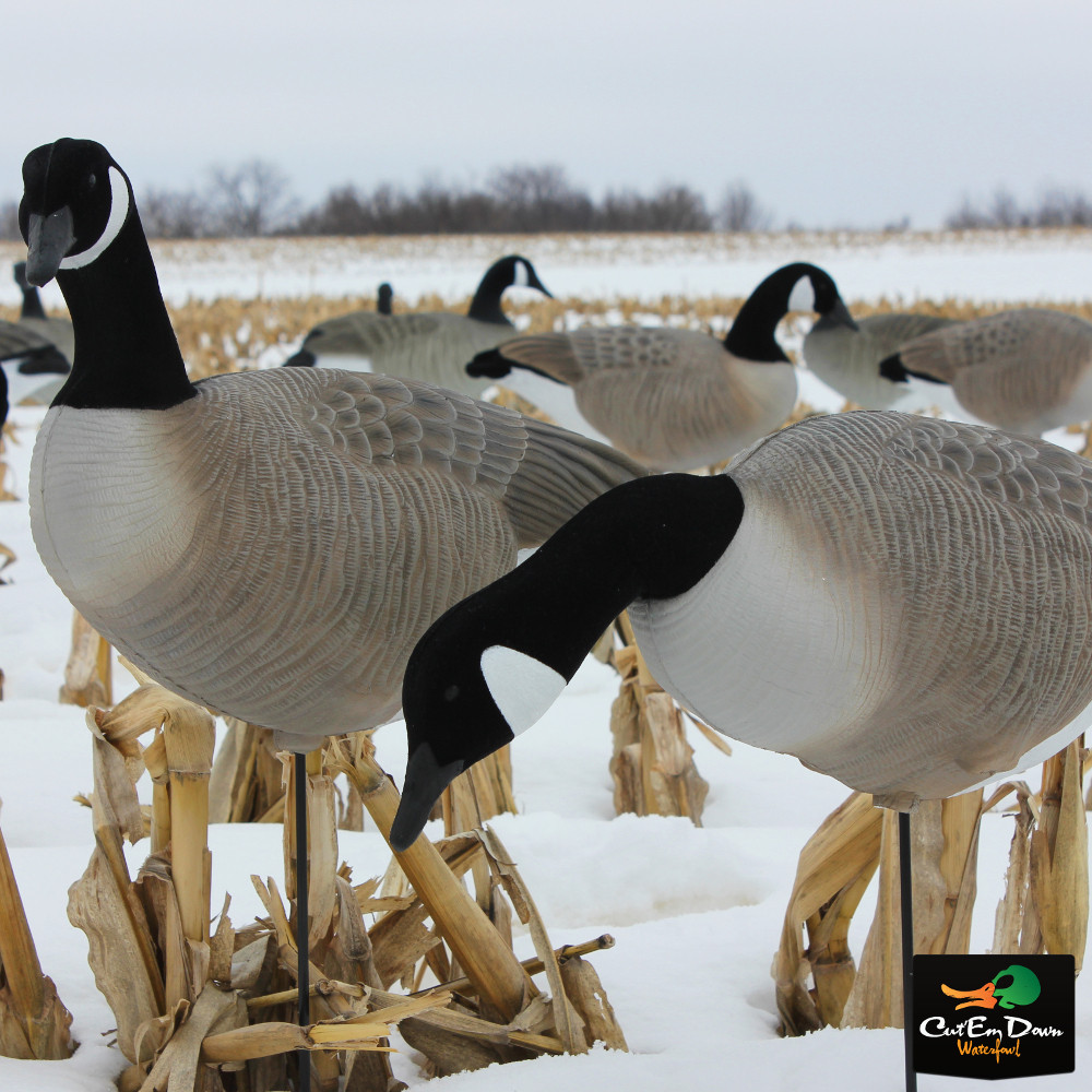 Details about NEW WHITE ROCK COLLAPSIBLE FULL BODY CANADA GOOSE DECOYS  6-PACK W/ STAKES