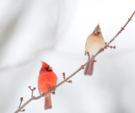 Sat Feb 8 11:15a-12:15p - Bird Talk with The Wild Bird Man