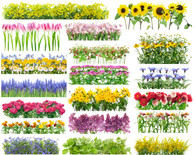 Sat Feb 15 11:15a-12:15p - Starting Your Flower Garden by Seed