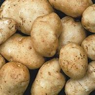 Kennebec Potato 5 lb.