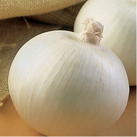 White Ebenezer Onion 1lb.