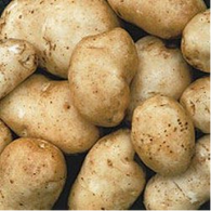 Kennebec Potato