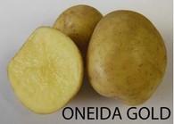 Oneida Gold Potato