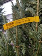 Fraser Fir 11'-12' Cut