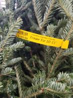 Fraser Fir 10'-11' Cut