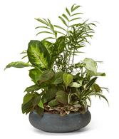 Tropical Dish Garden in Ceramic (medium)