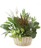 Tropical Dish Garden in Basket (Medium)