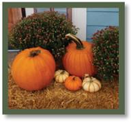 Fall Package #6 Porch Pumpkins
