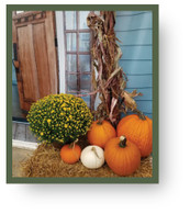 Fall Package #7