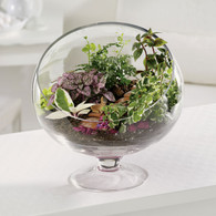 Terrarium Treat