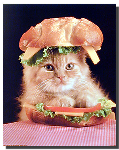 Cat In A Sandwich Poster Animal Posters Cat Posters