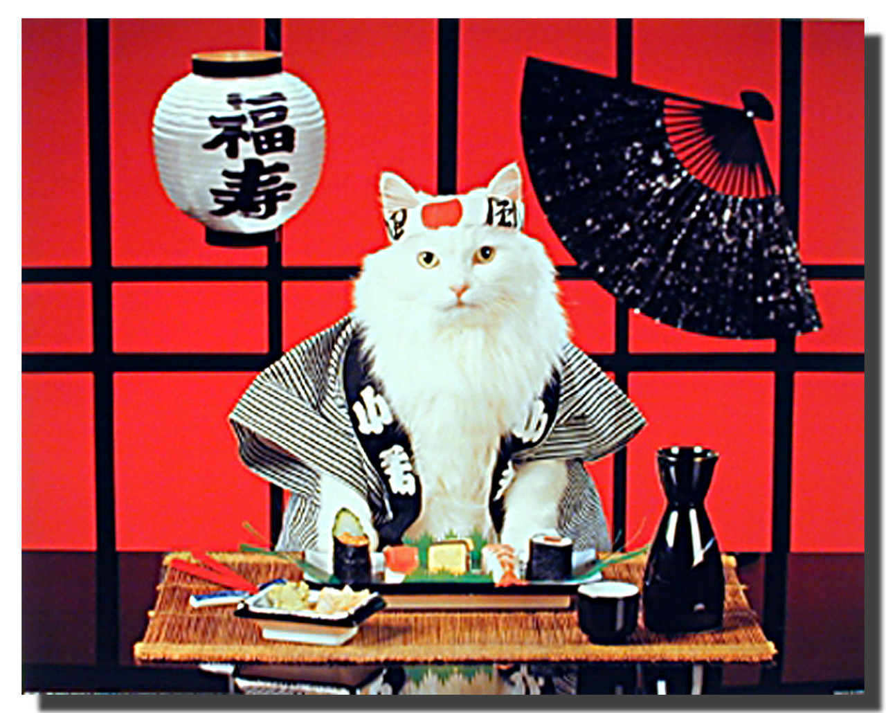 Sushi Cat Poster Animal Posters Cat Posters