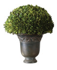 Uttermost Preserved Boxwood in Urn