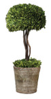 Uttermost Preserved Boxwood Topiary