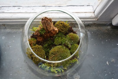 moss-terrarium-400x267.jpg
