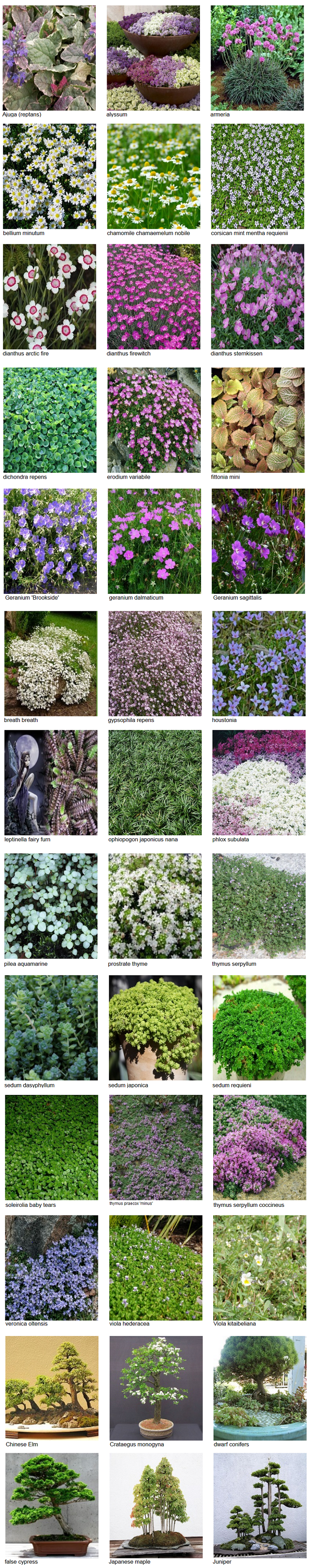 plants4.png