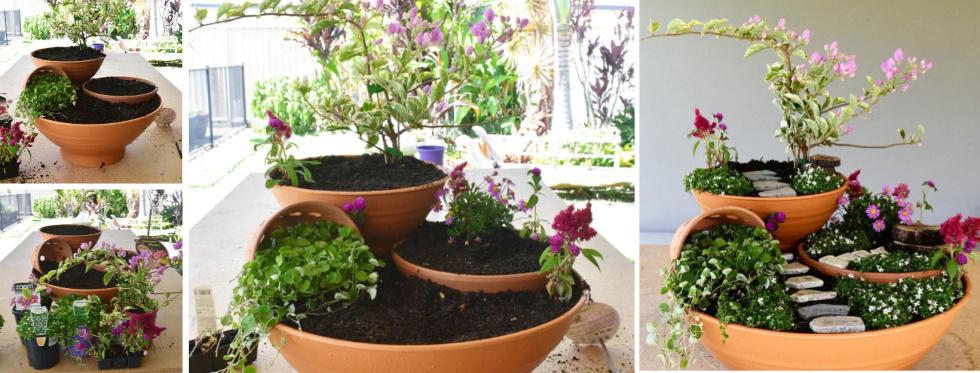 the-plants.jpg