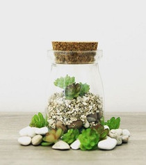 Mini Cacti Terrarium Kit