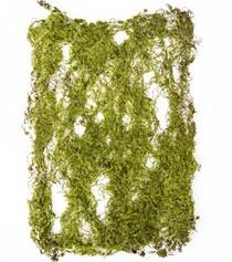 Moss Mat 22x26cm