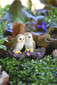 Miniature Fairy Garden Owls | Miniature Fairy Garden | Cozy Owls