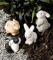 Bunny Rabbit x1