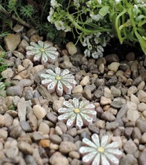 Daisy Stepping Stones