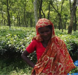 Banu Tea Garden Stories