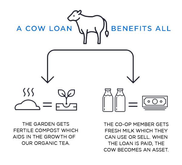 Cattle Lending